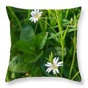Greater Stitchwort Stellaria Throw Pillow