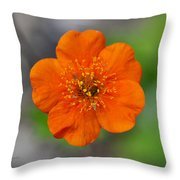 Grecian Rose Close 1 Throw Pillow by Roger Snyder