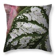 Green And Pink Caladiums Throw Pillow