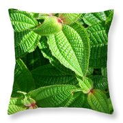 Green And Ruffled Throw Pillow