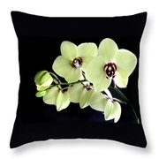 Green And Wine Hybrid Phalaenopsis Orchid Throw Pillow