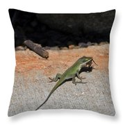 Green Anole Lizard Vs Wolf Spider  Throw Pillow