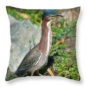 Green-backed Heron Butorides Virescens Throw Pillow