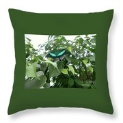 Green Banded Butterfly Throw Pillow