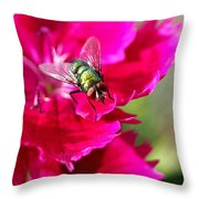 Green Bottle Fly On Dianthus  Throw Pillow