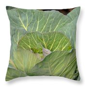 Green Cabbage Throw Pillow