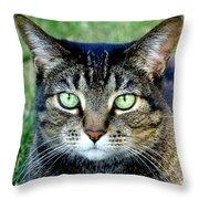Green Cat Eyes In Summer Grass Throw Pillow