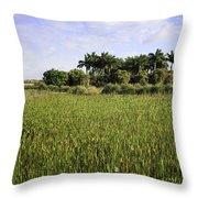 Green Cay Wetlands Throw Pillow