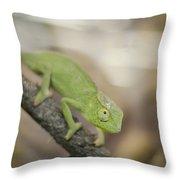 Green Chameleon Throw Pillow