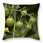 Green Cherry Tomatoes On The Vine Throw Pillow
