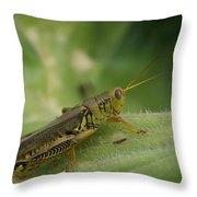 Green Closeup Grasshopper Throw Pillow