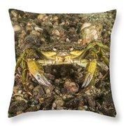 Green Crab Throw Pillow