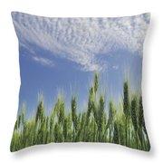 Green Crops Northwest Of Edmonton Throw Pillow
