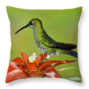 Green-crown Brilliant Female Throw Pillow