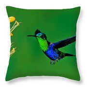 Green-crowned Woodnymph Throw Pillow