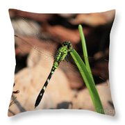 Green Dragonfly On Grass Square Throw Pillow