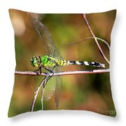 Green Dragonfly On Twig Square Throw Pillow