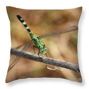 Green Dragonfly Square Throw Pillow