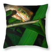 Green Eye'd Frog Throw Pillow