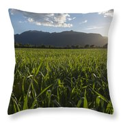 Green Field In Sunset Throw Pillow