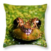 Green Frog Hiding Throw Pillow