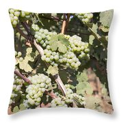Green Grapes Growing On Grapevines Throw Pillow