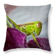 Green Grasshopper I Throw Pillow