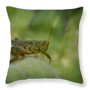 Green Grasshopper You Looking At Me Throw Pillow