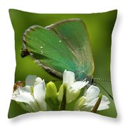 Green Hairstrek  Throw Pillow