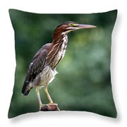Green Heron 2 Throw Pillow