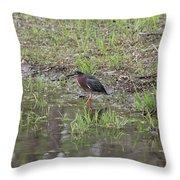 Green Heron Along Shore Throw Pillow