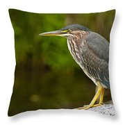 Green Heron Pictures 378 Throw Pillow