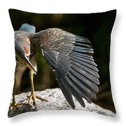 Green Heron Pictures 382 Throw Pillow