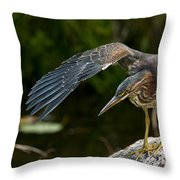 Green Heron Pictures 386 Throw Pillow