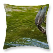 Green Heron Pictures 414 Throw Pillow