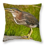 Green Heron Pictures 449 Throw Pillow