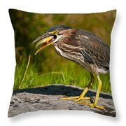 Green Heron Pictures 457 Throw Pillow