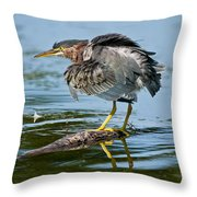 Green Heron Pictures 469 Throw Pillow