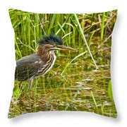 Green Heron Pictures 545 Throw Pillow