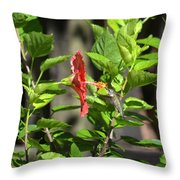 Green Hummingbird On Red Hibiscus Flower 5 Of 10 Throw Pillow