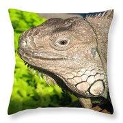 Green Iguana Face Throw Pillow