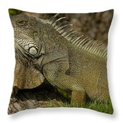 Green Iguana Guayaquil Ecuador Throw Pillow