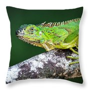 Green Iguana Iguana Iguana, Tarcoles Throw Pillow