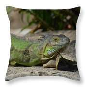 Green Iguana Lizard Throw Pillow