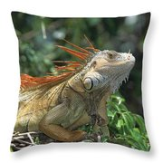 Green Iguana Male Portrait Central Throw Pillow