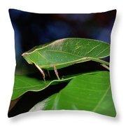 Green Leaf-mimic Katydid Steirodon Throw Pillow