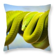 Green Mamba Coiled Up On A Branch Throw Pillow