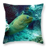 Green Moray Eel With Cleaning Fish Throw Pillow