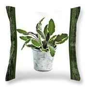 Green Sage Herb In Small Pot Throw Pillow by Elena Elisseeva
