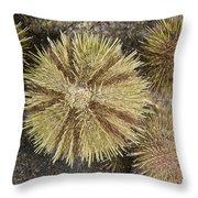 Green Sea Urchins Throw Pillow